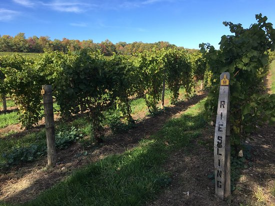 Seneca Lake Wine Trail: photo7.jpg