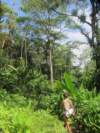 Hostal Bastimentos: Jungle trek with hostel staff Marta