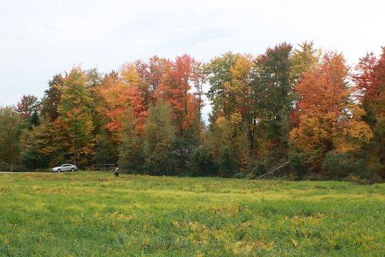 Jeffersonville, VT: Trail walk
