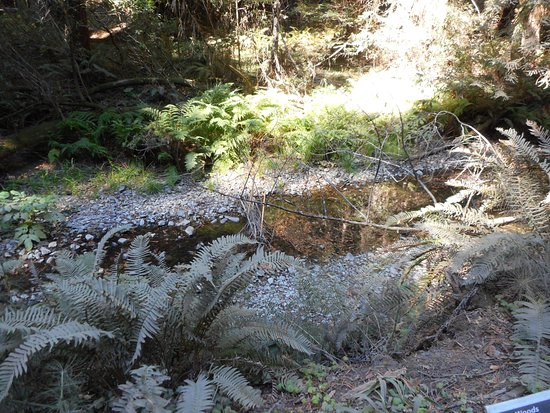 Mill Valley, كاليفورنيا: Nature..