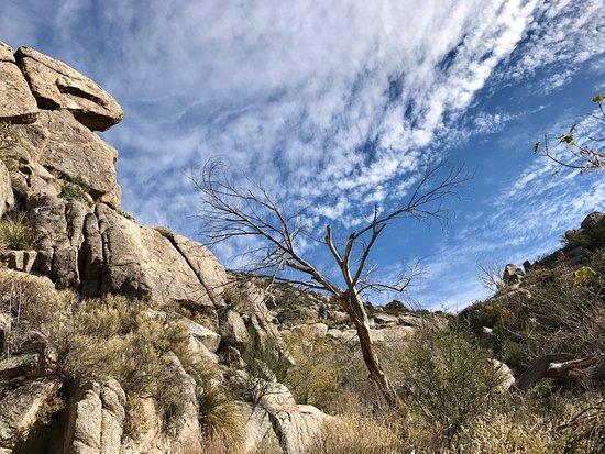 Foothills Trails