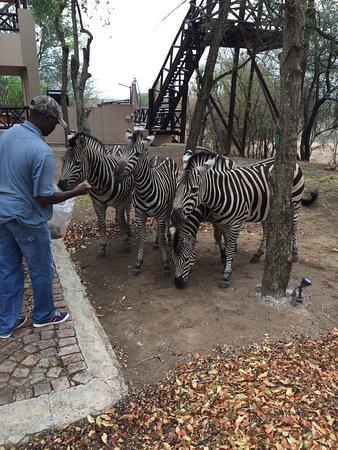Marloth Park, Sudafrica: Royal Kruger
