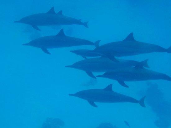 Blue Reef Red Sea Resort-bild