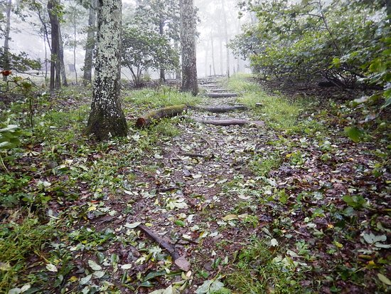 Lewis Mountain Cabins : Misty morning walk