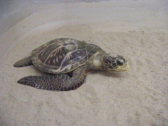 Marina Park And Aquarium Turtle On The Beach