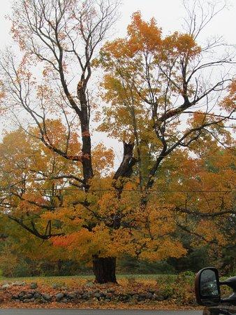 Mason, NH: Beautiful fall leaves.