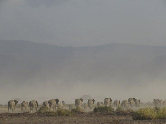 Tortilis Camp-bild