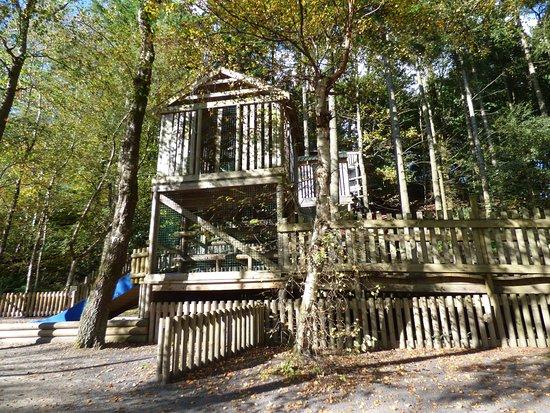 Y Felinheli, UK: The tree house
