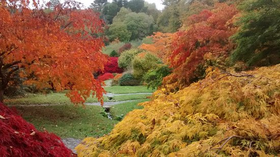 The Garden House: The Acers in October