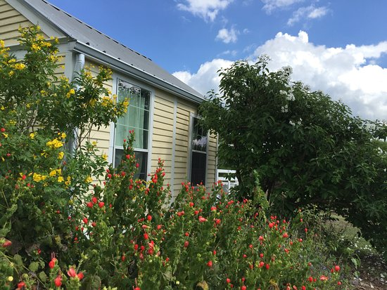 Berclair, TX : Hummingbird House is surrounded by native plants that draw in hummers and butterfly