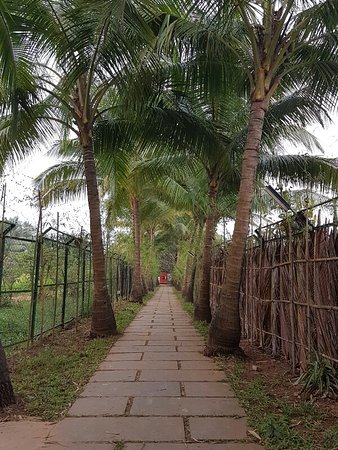 Oasis em Goa