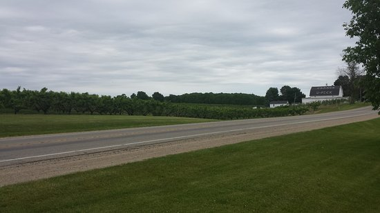 Fennville, MI: Orchards across the street