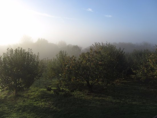 Rudge Farm Cottages: Early Morning Mist