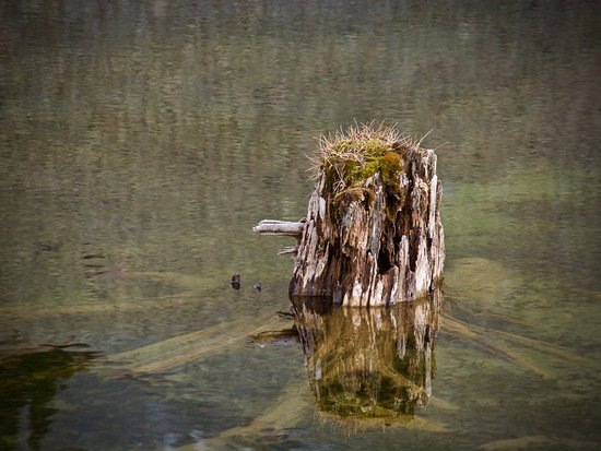 Telluride, CO: Old Tree Stump At The Lake