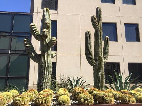 Maricopa, AZ : Amazing garden with hugh cactus