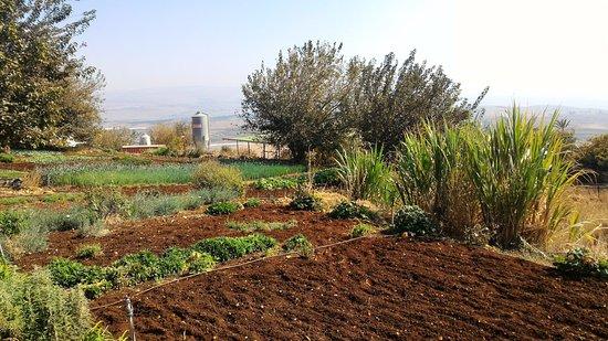 Hotel Mitzpe Hayamim: View of the farm fields