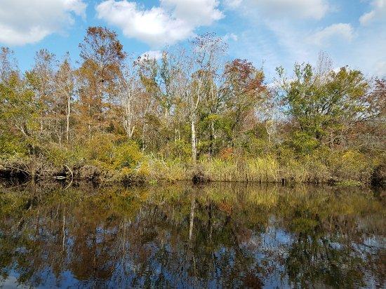Plantation River Tours