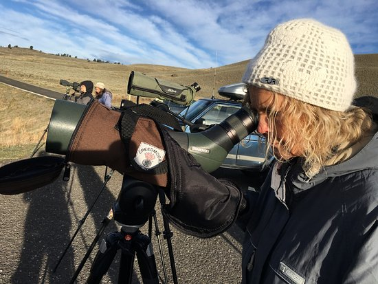 Gardiner, MT : Using high quality spotting scope provided by Wolf Tracker.