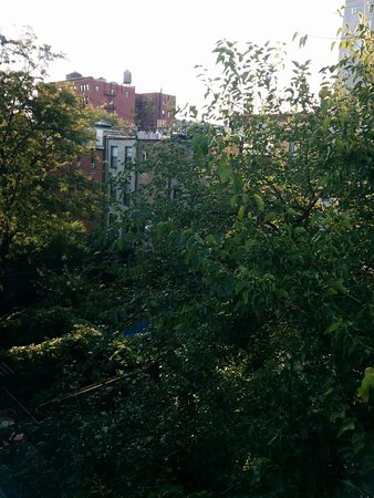 The Harlem Flophouse: Lovely green view!