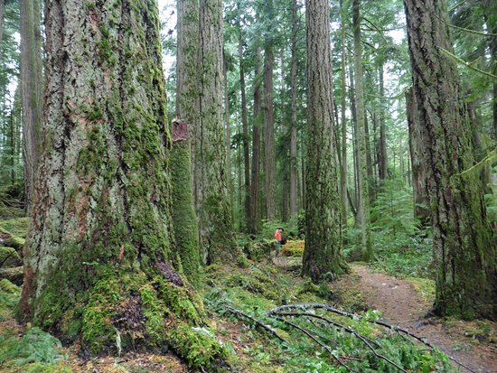 Sechelt, Kanada: Big Trees