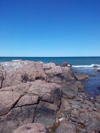 Piedras Coloradas: sobre las piedras, fauna marina!