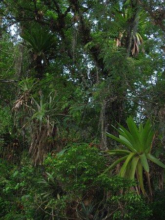 Los Toldos, Argentyna: the Baritu park