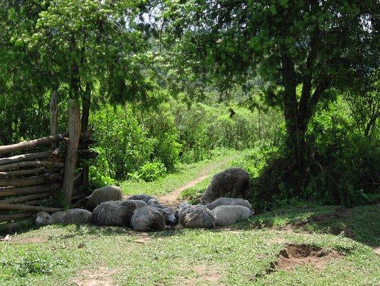 Los Toldos, Argentyna: borderline btw park and the village