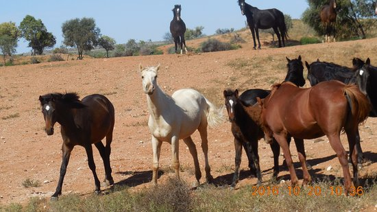 Tri State Safaris Outback Tours