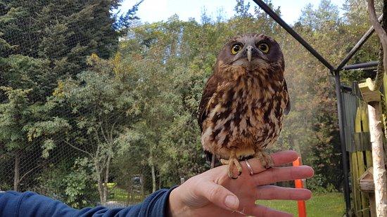 Kiwi Birdlife Park: 20161029_161823_large.jpg