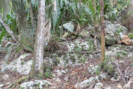 Mariposa Jungle Lodge: Mayan mounds outside of cabanas