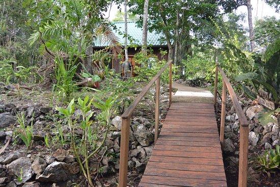 Mariposa Jungle Lodge: Path to Puma cabana