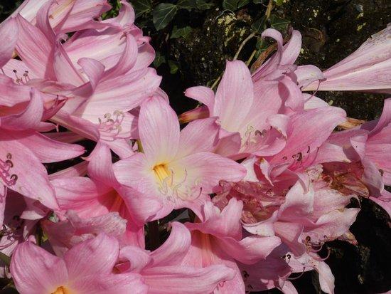 Piedimonte Etneo, Italien: Wilde Lilien