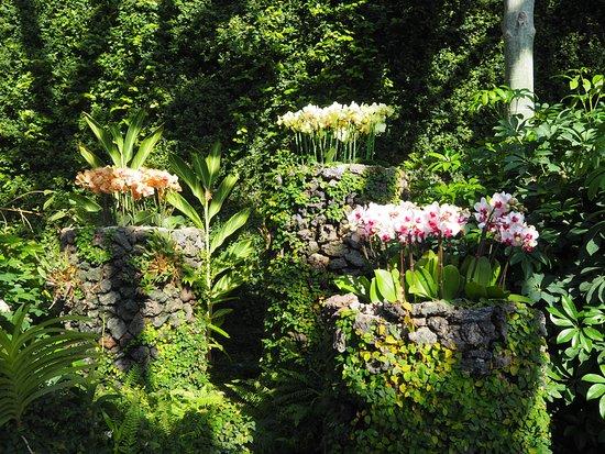 제주 여미지 식물원
