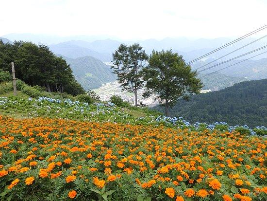 Yuzawa Highland Alpine Garden