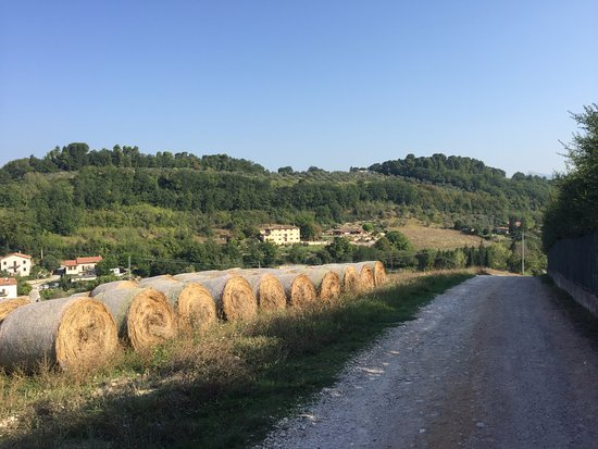 Il Sogno: Track to the property from town which we walked daily