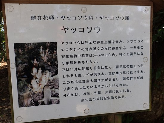 最御崎寺, ヤッコソウの説明板