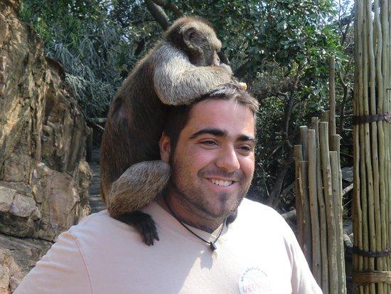 Germiston, แอฟริกาใต้: Monkey Sanctuary Hartebeestpoort