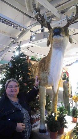 Glencarse, UK: Large Deer