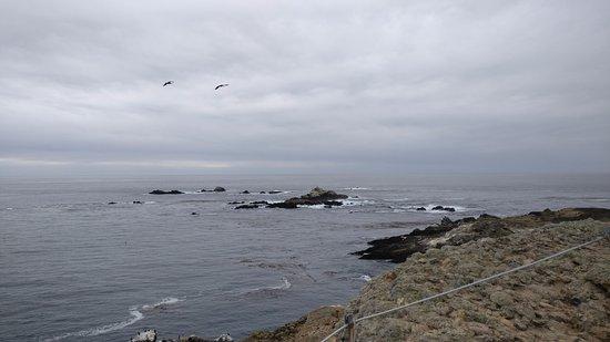 Point Lobos State Reserve: Point Lobos 1