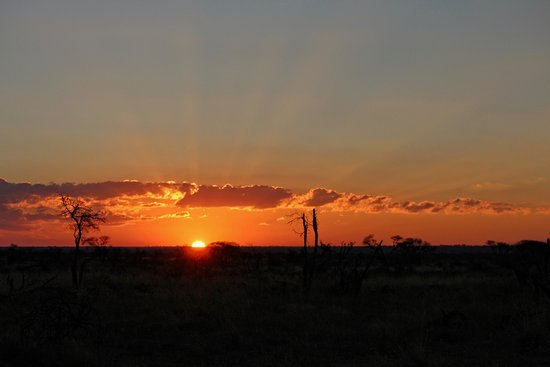Mosetlha Bush Camp & Eco Lodge: This is what you see when on a sundowner drive.