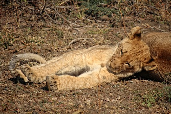 Mosetlha Bush Camp & Eco Lodge: Time for a nap.