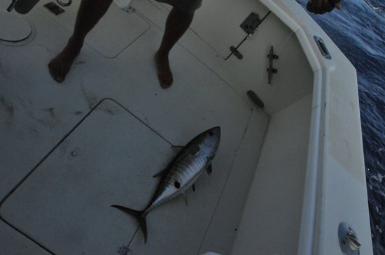 High Noon Sport Fishing: Yellowfin Tuna on board!!