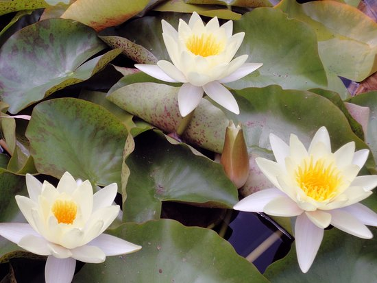 Jardín Botánico de Soller: Jardi Botanic de Soller