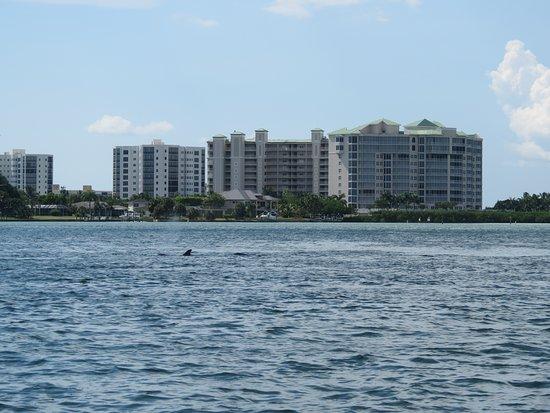 Lovers Key Resort: DELFINES!!!!