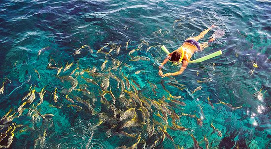 Sugarloaf Key, فلوريدا: Snorkeling among the fish & sealife at a Lower Keys reef