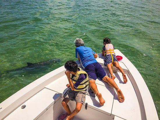 Sugarloaf Key, FL: A common dolphin encounter in The Lower Keys Backcountry