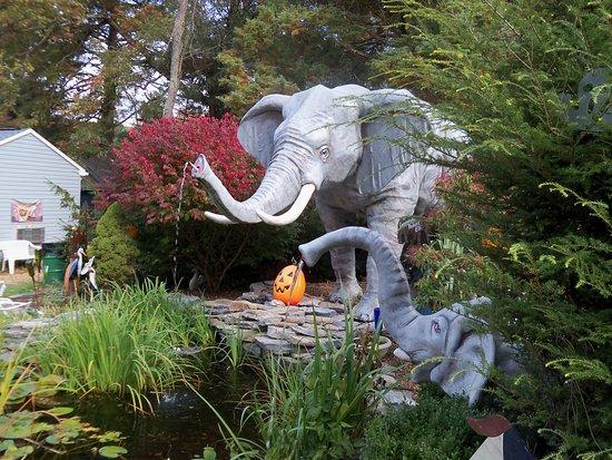Orrtanna, Pensilvania: From the garden