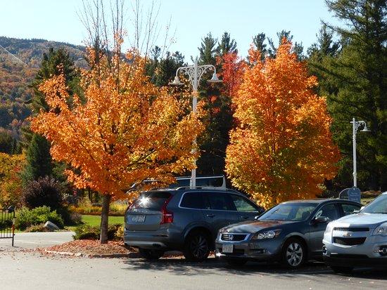 Omni Mount Washington Resort: Fall colour