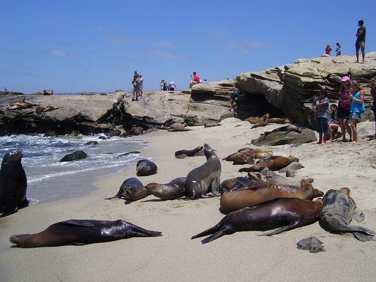 Surf Diva Surf School : La Jolla Shore ( San Diego)