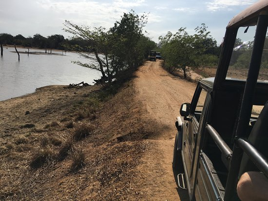 Car hire and safari in Mattala Lake View Cottage and Yala Park